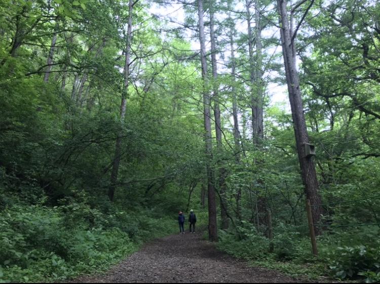 軽井沢のハイキングスポット!小鳥のさえずりに癒しを求め歩く「軽井沢野鳥の森」